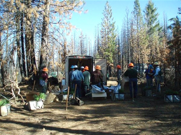 Planting on Plumas National Forest